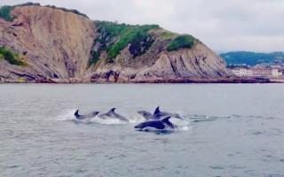 Delfines en Crusoe Treasure